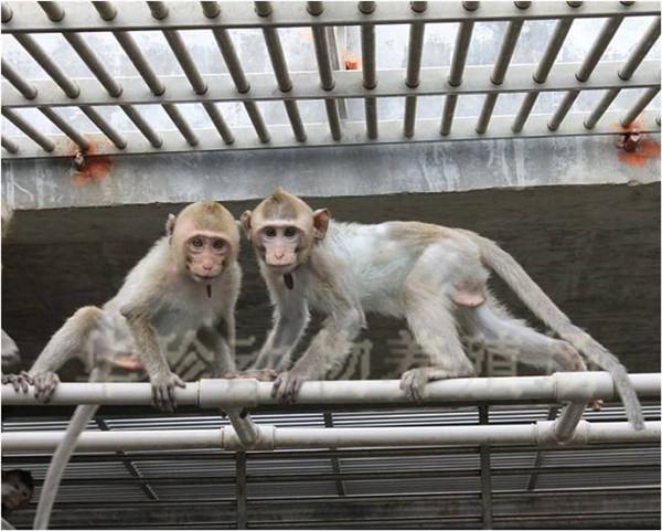 实验动物_从化市华珍动物养殖场